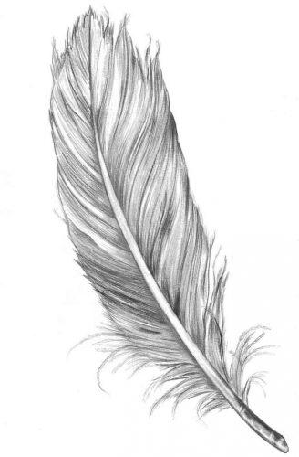 tatuajes-de-plumas46